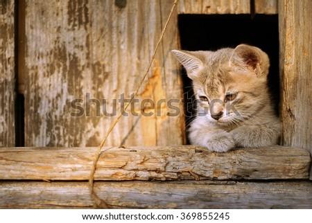 Cute sad kitten sits in hole of the fence. Sad mood, sad emotion.Thinking face. Sad face - stock photo