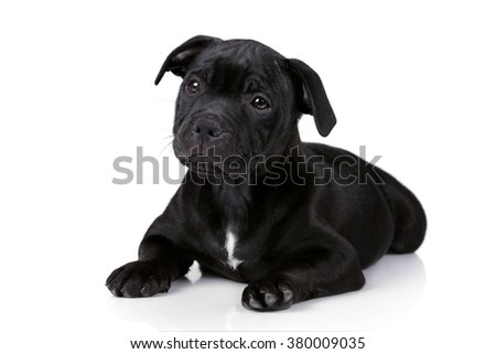 Cute sad puppy on a white background