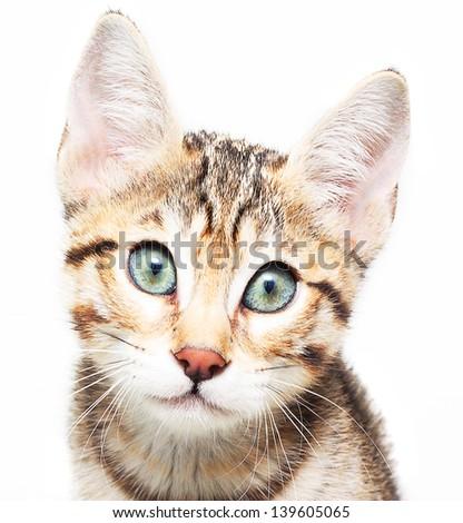 Cute sadly kitten. - stock photo