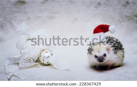 cute santa claus hedgehog baby in christmas background - stock photo