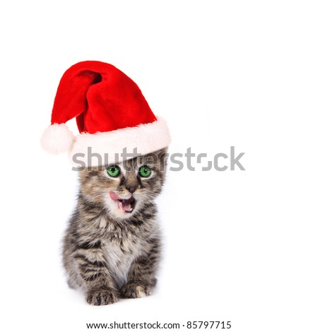 Cute santa kitten on white - stock photo