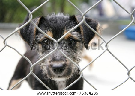 Cute scruffy pup looking out from behind the wire mesh of his pen - stock photo
