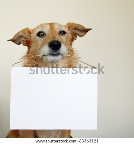 Cute scruffy terrier dog holding a blank sign - stock photo