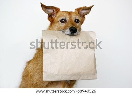 Cute scruffy terrier dog holding a brown paper bag in her mouth - stock photo
