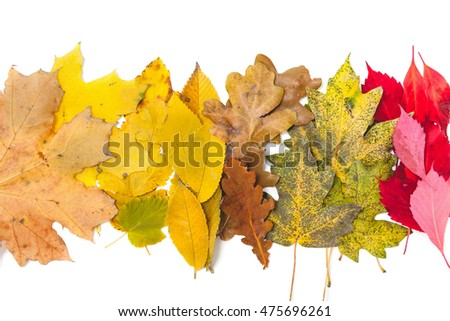 Cute set of autumn leaves. The leaves of maple and oak lined in a row on a white background