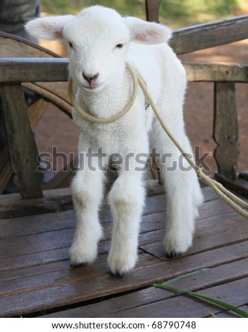 Cute sheep - stock photo