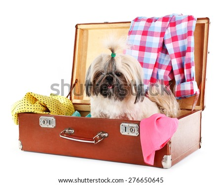 Cute Shih Tzu in suitcase with clothes isolated on white