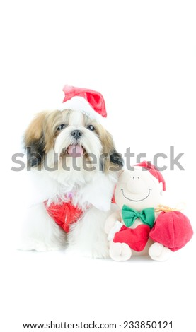 Cute shih tzu puppy in christmas theme?