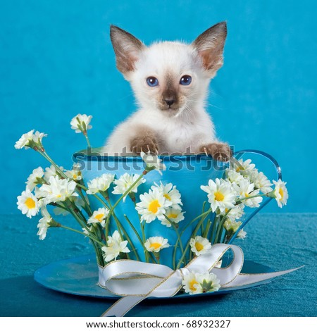 Cute Siamese kitten in large cup decorated with daisies flowers - stock photo