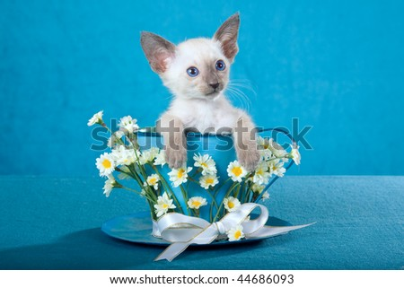 Cute Siamese kitten sitting in large cup decorated with flowers, on blue background fabric - stock photo