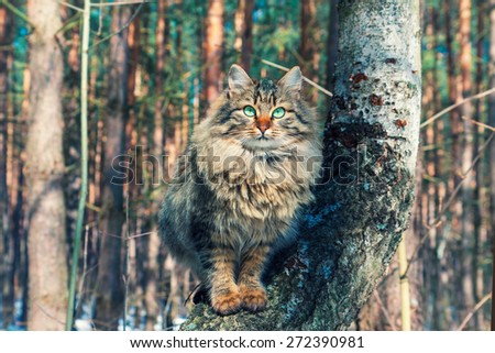 Cute siberian cat relaxing on the tree in the forest - stock photo