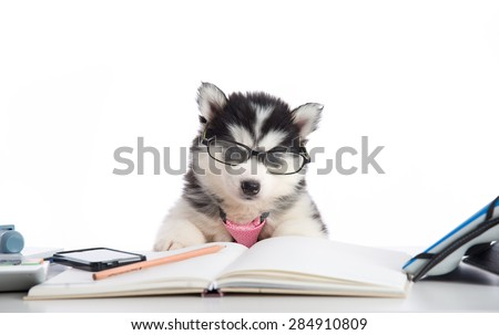 Cute siberian husky puppy in glasses working on white table - stock photo