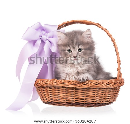 Cute siberian kitten in a wicker basket isolated on white background - stock photo