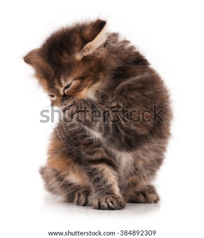 Cute siberian kitten washes after feading over white background - stock photo
