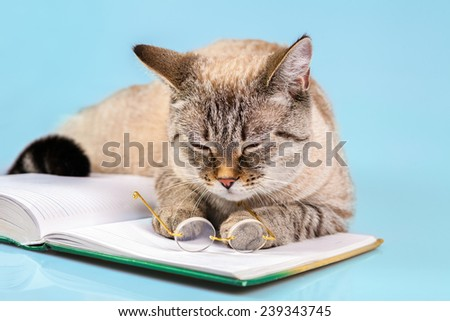 Cute sleeping business cat with glasses lying on notebook (book)
