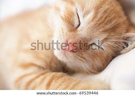 Cute sleeping kitten cat closeup