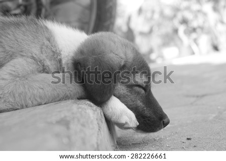 cute sleeping puppy - stock photo