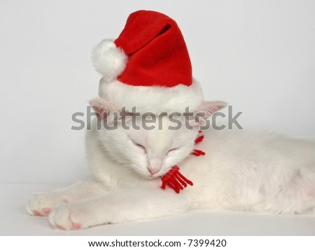 cute sleeping white kitten with christmas hat
