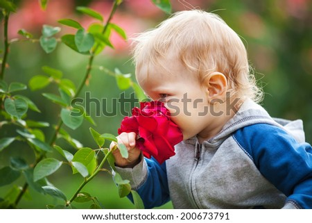 Cute small boy smelling red rose - stock photo