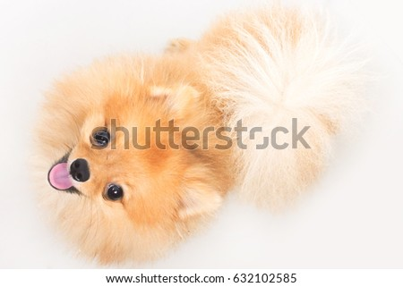 Cute small dog on a white background.