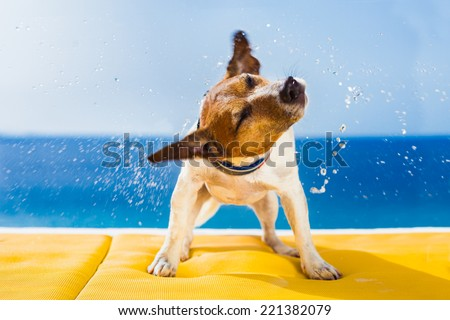 cute small dog shaking at the beach with closed eyes - stock photo