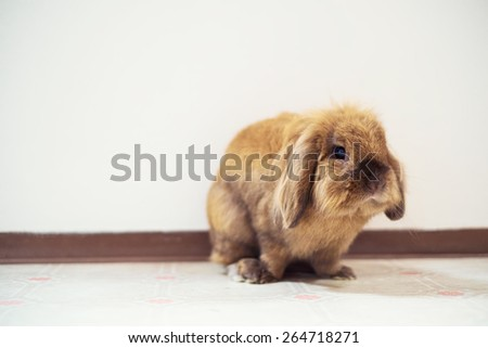 Cute small easter bunny with white background - stock photo
