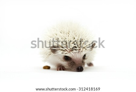cute small hedgehog baby - stock photo