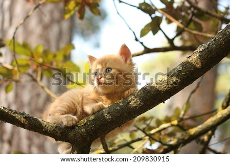 Cute small kitten climbing the tree in summer - stock photo