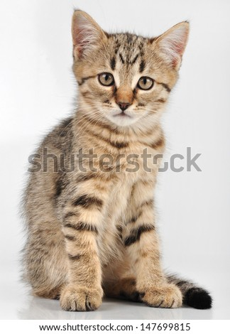 Cute small  kitten with a necklace. Studio shot.