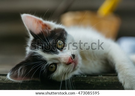 cute small lovely curious baby cat or kitten with white color spotted fur and whiskers on wooden board outdoor