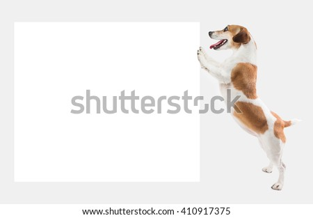 Cute smart dog holding pushing white board ( placard, poster ) where you can place your information logo or images. Template mockup for ad offers. Gray ( grey ) background