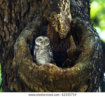 Cute smiling Owl - stock photo