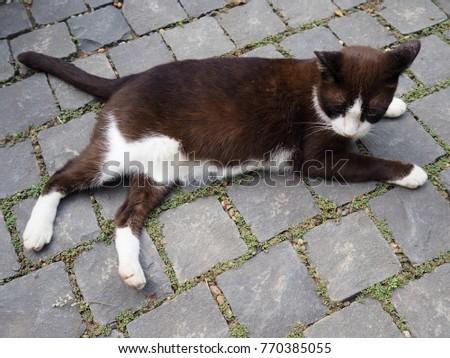cat farting videos