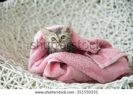 Cute soggy kitten after a bath in pink towel - stock photo