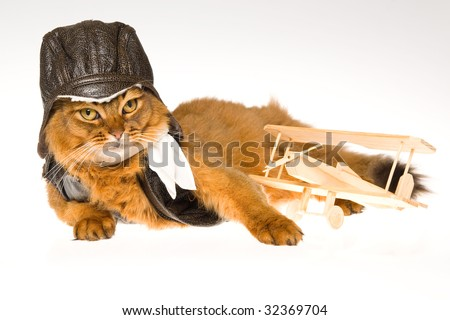 Cute Somali cat with pilot outfit and mini plane, on white background - stock photo