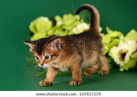 Cute somali kitten on the green background with flowers - stock photo