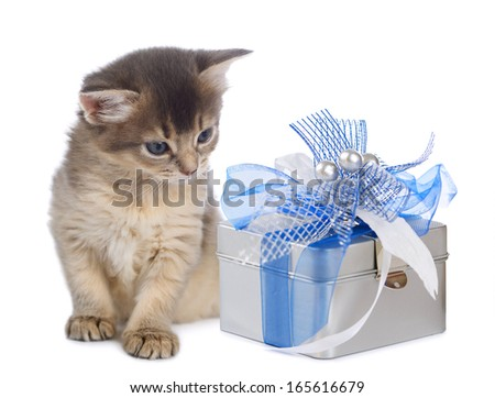 Cute somali kitten sitting near a present box on white background - stock photo