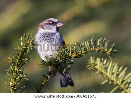 Cute sparrow bird sitting on a branch - stock photo
