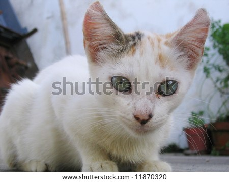 Cute spooky looking stray alley cat - stock photo