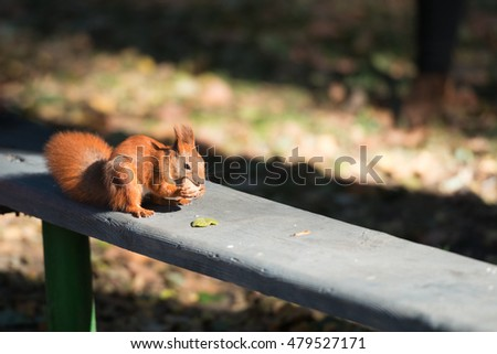 Cute squirrel with nut on a bench in the park