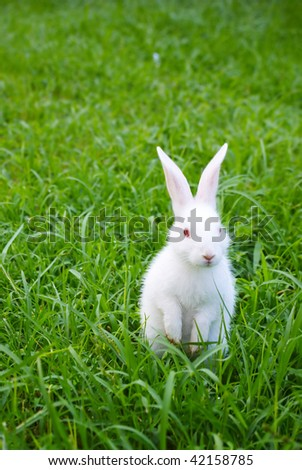 cute standing white rabbit on the grass - stock photo
