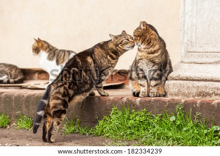cute stray cats sniffing each other - stock photo
