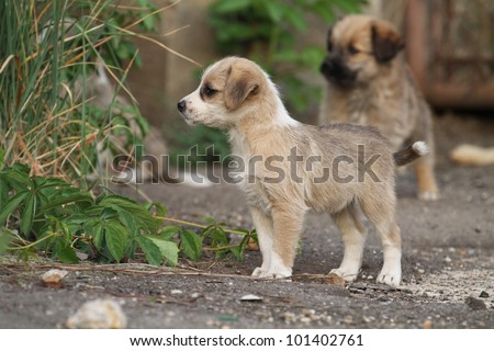 Cute stray puppies - stock photo