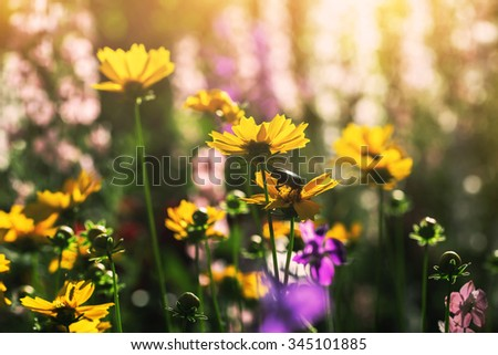 cute summer flowers in a garden - stock photo