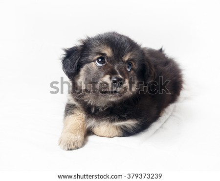 Cute sweet little puppy dog on light background. Selective focus.