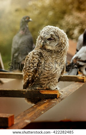 cute sweet owl with grey and brown feathers with funny look sitting on background
