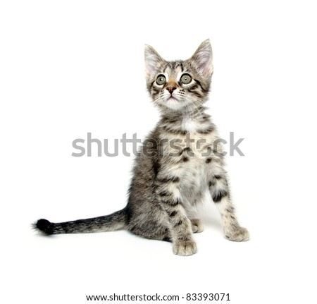 Cute tabby baby cat playing on white background
