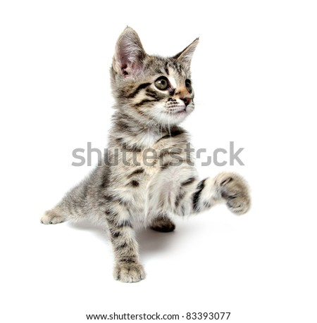 Cute tabby baby cat playing on white background - stock photo