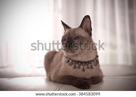 Cute tabby cat at home, laying on sofa. - stock photo
