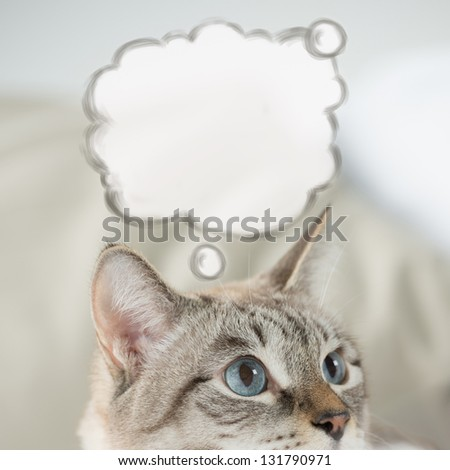 Cute tabby cat at home - laying on sofa and thinking, blank balloon with thoughts overhead - stock photo